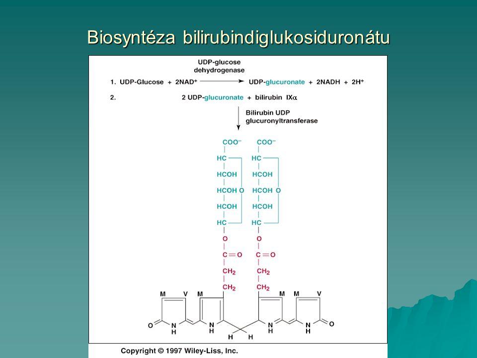 Biosyntéza bilirubindiglukosiduronátu