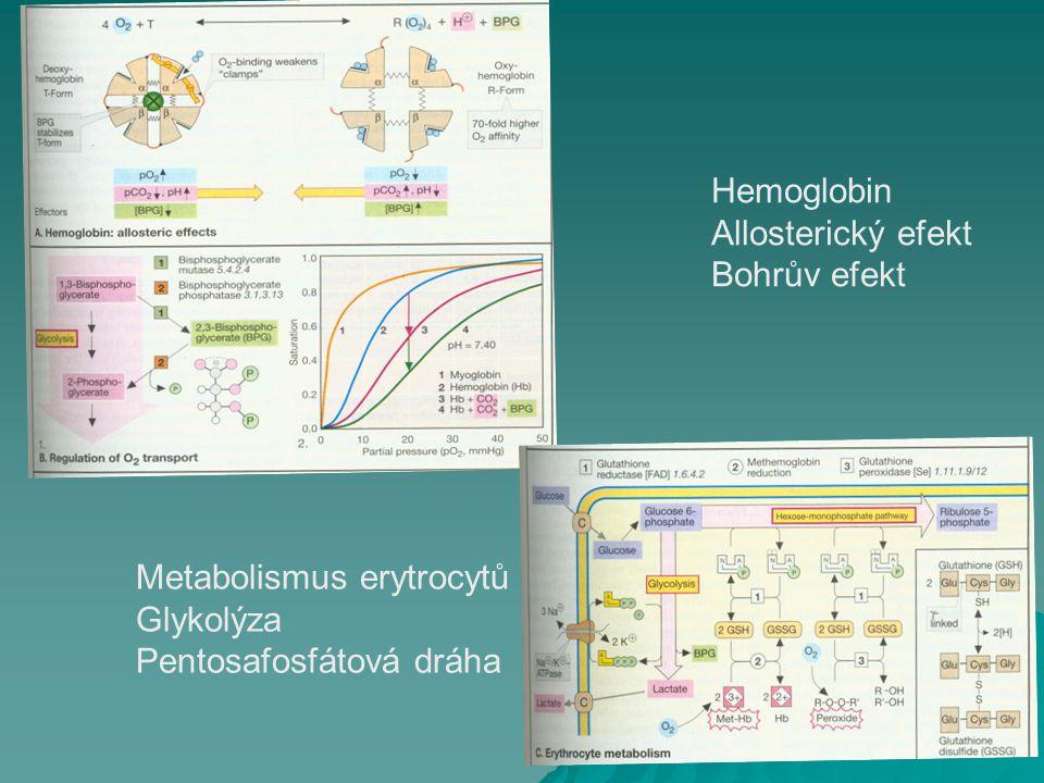 Hemoglobin Allosterický efekt Bohrův efekt Metabolismus erytrocytů Glykolýza Pentosafosfátová dráha