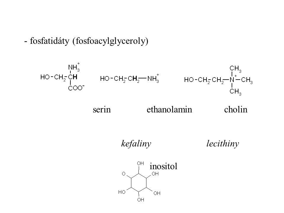 serin ethanolamin cholin kefalinylecithiny inositol - fosfatidáty (fosfoacylglyceroly)