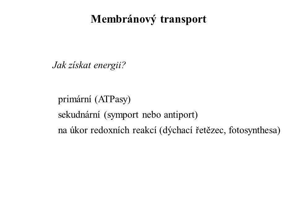 primární (ATPasy) sekudnární (symport nebo antiport) na úkor redoxních reakcí (dýchací řetězec, fotosynthesa) Jak získat energii? Membránový transport
