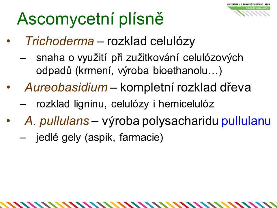 Ascomycetní plísně Trichoderma – rozklad celulózy –snaha o využití při zužitkování celulózových odpadů (krmení, výroba bioethanolu…) Aureobasidium – k