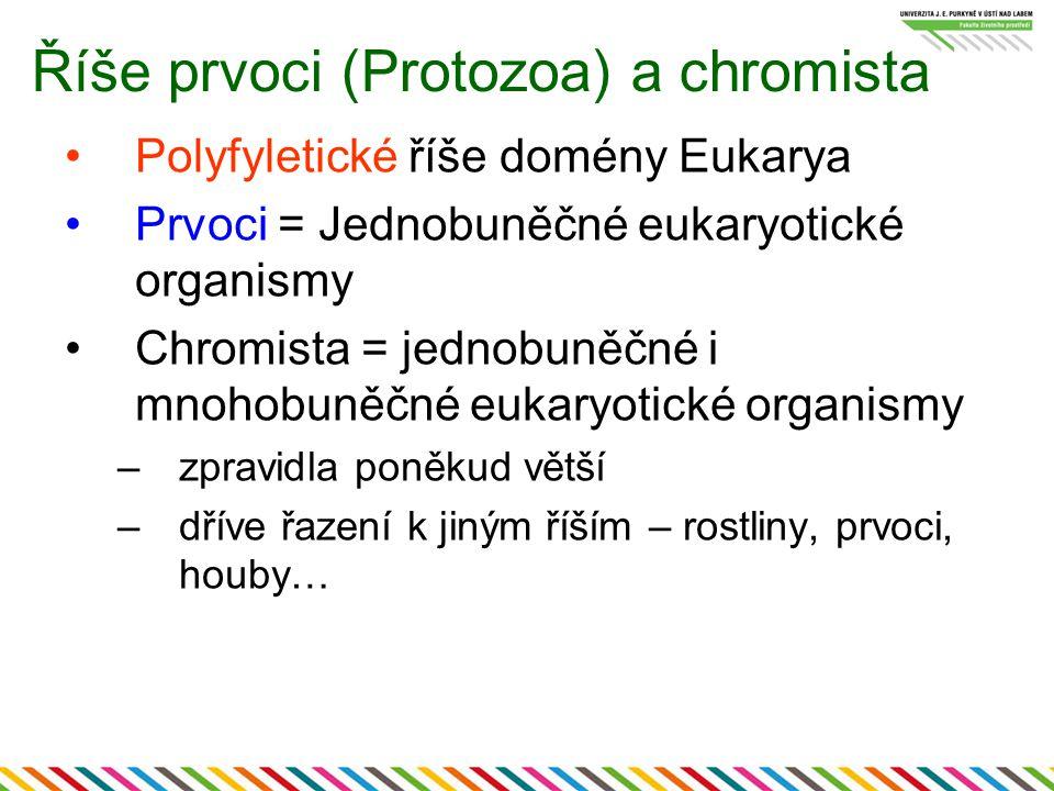 Říše prvoci (Protozoa) a chromista Polyfyletické říše domény Eukarya Prvoci = Jednobuněčné eukaryotické organismy Chromista = jednobuněčné i mnohobuně
