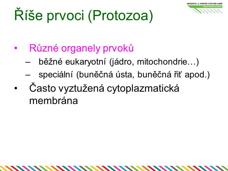 Říše prvoci (Protozoa) Různé organely prvoků –běžné eukaryotní (jádro, mitochondrie…) –speciální (buněčná ústa, buněčná řiť apod.) Často vyztužená cyt