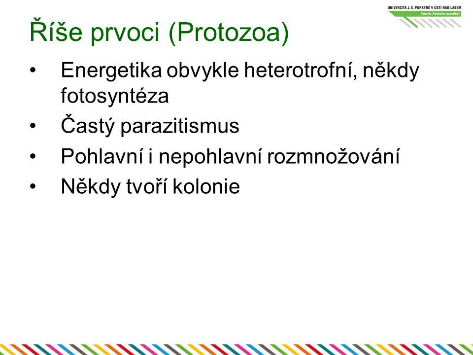 Říše prvoci (Protozoa) Energetika obvykle heterotrofní, někdy fotosyntéza Častý parazitismus Pohlavní i nepohlavní rozmnožování Někdy tvoří kolonie