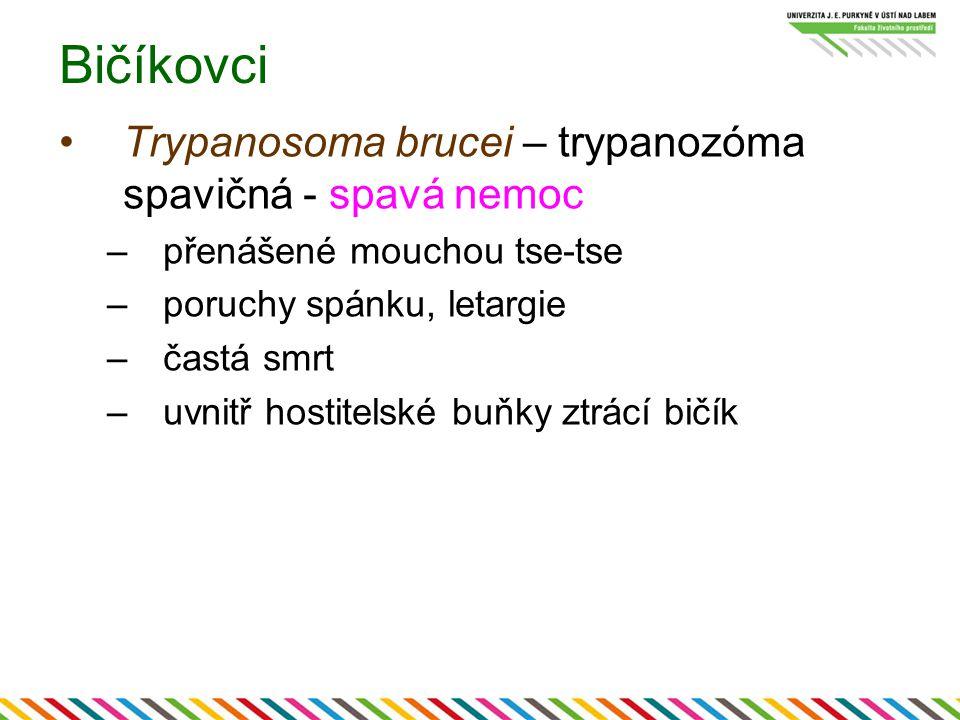 Bičíkovci Trypanosoma brucei – trypanozóma spavičná - spavá nemoc –přenášené mouchou tse-tse –poruchy spánku, letargie –častá smrt –uvnitř hostitelské