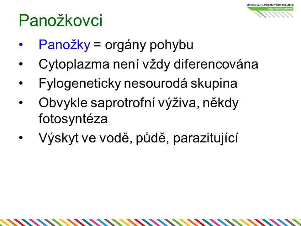 Panožkovci Panožky = orgány pohybu Cytoplazma není vždy diferencována Fylogeneticky nesourodá skupina Obvykle saprotrofní výživa, někdy fotosyntéza Vý