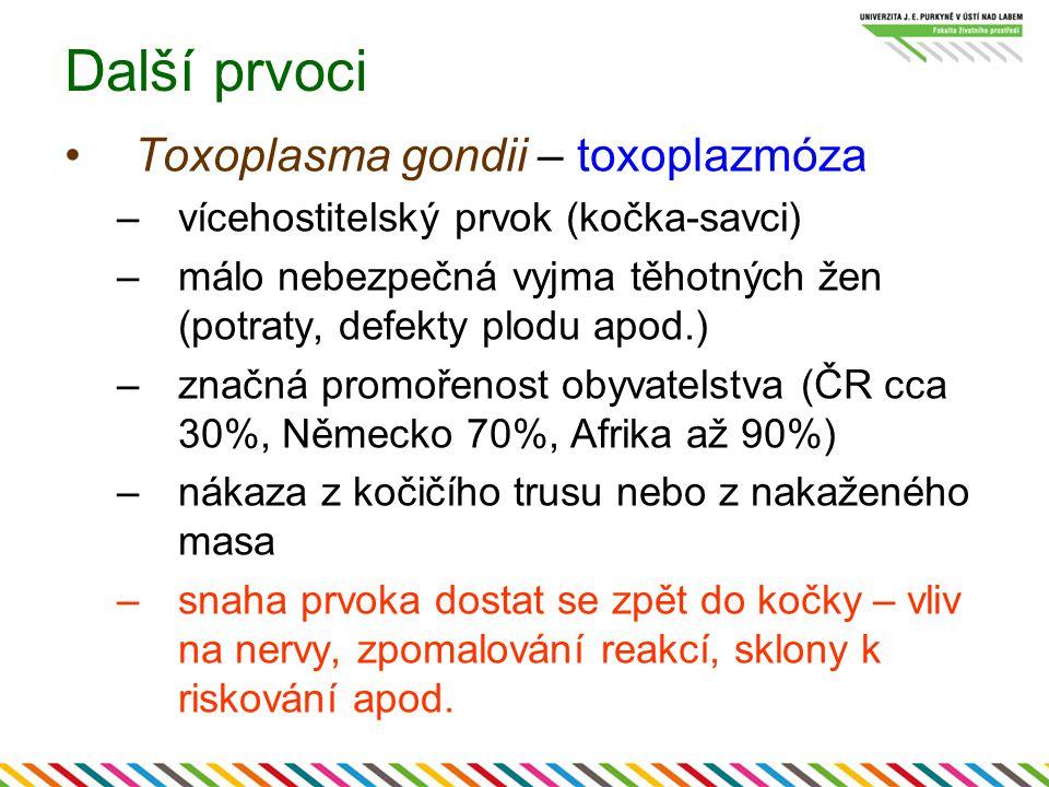 Další prvoci Toxoplasma gondii – toxoplazmóza –vícehostitelský prvok (kočka-savci) –málo nebezpečná vyjma těhotných žen (potraty, defekty plodu apod.)