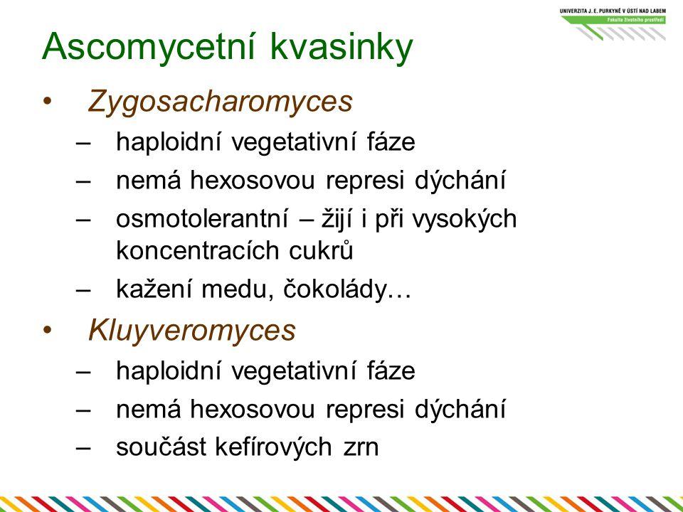 Ascomycetní kvasinky Zygosacharomyces –haploidní vegetativní fáze –nemá hexosovou represi dýchání –osmotolerantní – žijí i při vysokých koncentracích