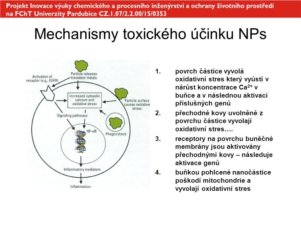 Mechanismy toxického účinku NPs 1.povrch částice vyvolá oxidativní stres který vyústí v nárůst koncentrace Ca 2+ v buňce a v následnou aktivaci příslu