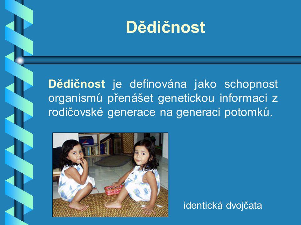 Dědičnost Dědičnost je definována jako schopnost organismů přenášet genetickou informaci z rodičovské generace na generaci potomků. identická dvojčata