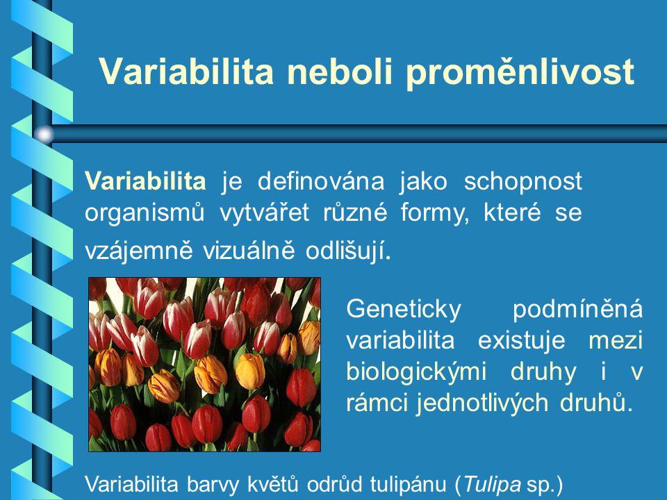 Variabilita neboli proměnlivost Variabilita je definována jako schopnost organismů vytvářet různé formy, které se vzájemně vizuálně odlišují. Genetick