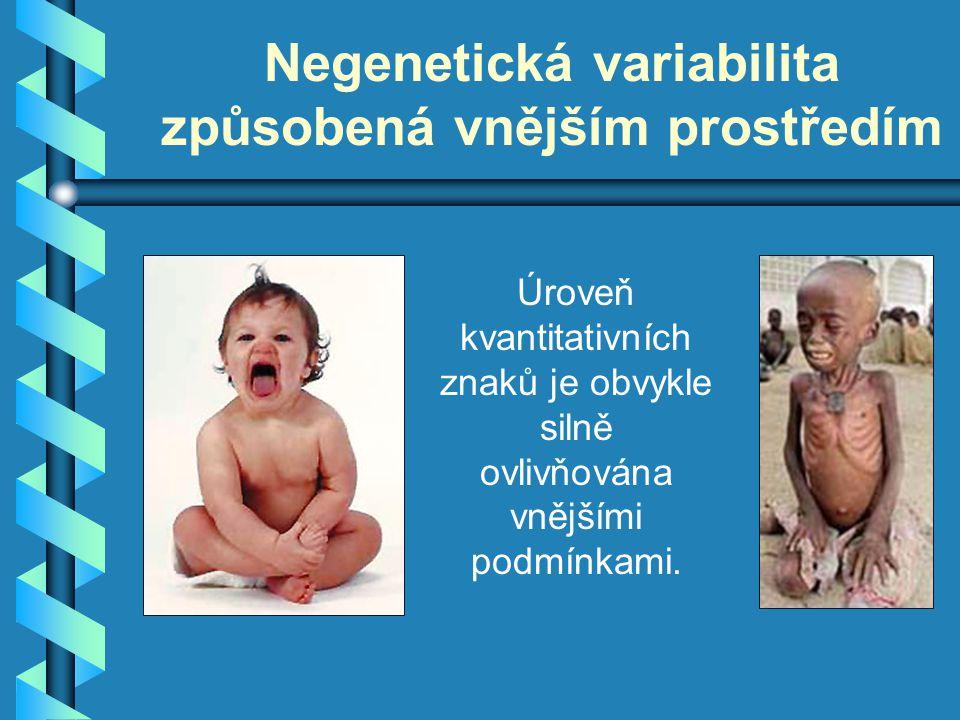 Negenetická variabilita způsobená vnějším prostředím Úroveň kvantitativních znaků je obvykle silně ovlivňována vnějšími podmínkami.
