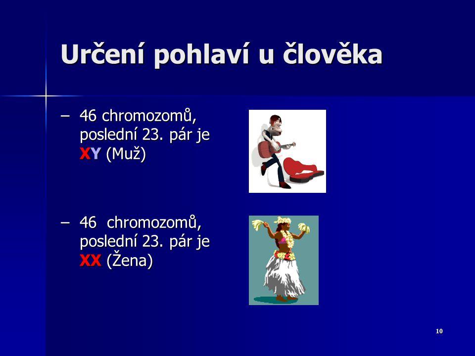 9 Dělení chromosomů podle typu Chromozomy somatické (autosomy) - tvoří homologické = stejné páry Chromozomy somatické (autosomy) - tvoří homologické = stejné páry - Počet autosomů: 44 (22 párů) - Počet autosomů: 44 (22 párů) Chromozomy pohlavní (gonosomy) - určují pohlaví jedince (nesou i jiné geny) a jsou heterologické = různé páry (X a Y) Chromozomy pohlavní (gonosomy) - určují pohlaví jedince (nesou i jiné geny) a jsou heterologické = různé páry (X a Y) - Počet gonosomů: 2 (1 pár) 23.