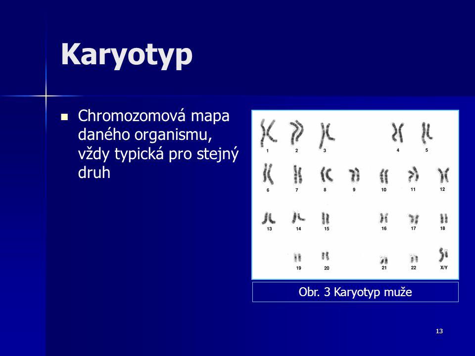 12 Homologické a heterologické chromozomy Homologické chromozomy Heterologické chromozomy