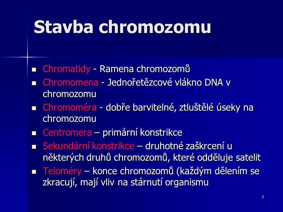 6 Stavba chromozomu 1. chromatida 2. centromera 3. krátké rameno chromatidy 4. dlouhé rameno chromatidy 5. konce chromozomů - telomery Obr. 2 Schéma c