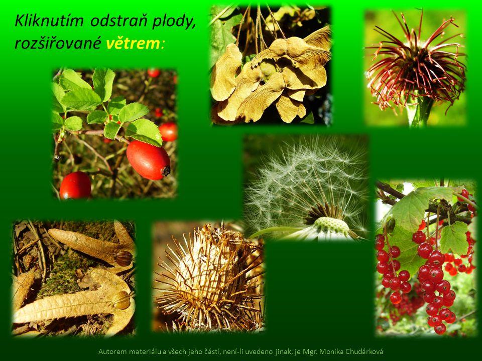 Kliknutím odstraň plody, rozšiřované větrem: Autorem materiálu a všech jeho částí, není-li uvedeno jinak, je Mgr. Monika Chudárková