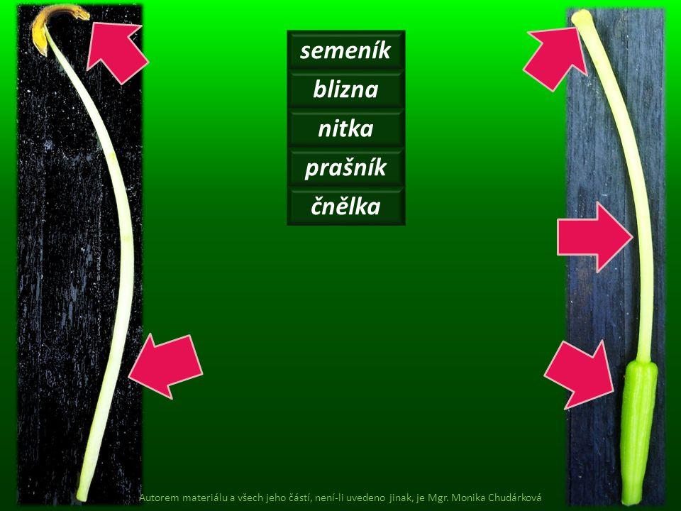 semeník blizna nitka prašník čnělka Autorem materiálu a všech jeho částí, není-li uvedeno jinak, je Mgr. Monika Chudárková