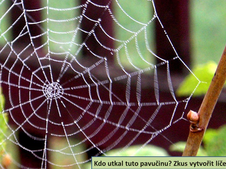 Kdo utkal tuto pavučinu? Zkus vytvořit líčení.