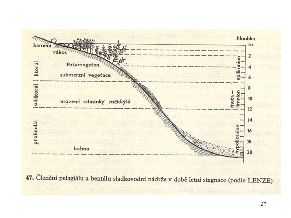 28 Litorál příbřežní prosvětlená zóna bentálu (toky - ripál) odpovídá epilimnionu charakter a rozsah dán morfologií nádrže propustností vody pro světlo lze jej dále členit na: epilitorál – půda již není přeplavována, hladina závislá na výšce hladiny, přechod k terestrickému biotopu, z rostlin hygrofyty, mezofyty eulitorál - dochází k velkému kolísání vody, převážně emerzní makrofyty (helofyty, hygrofyty) sublitorál –přechodná zóna, odpovídá termoklině, vymezený letní nízkou hladinou v hlubší části rostou natantní a submerzní hydrofyty, v mělčí části emerzní rostliny