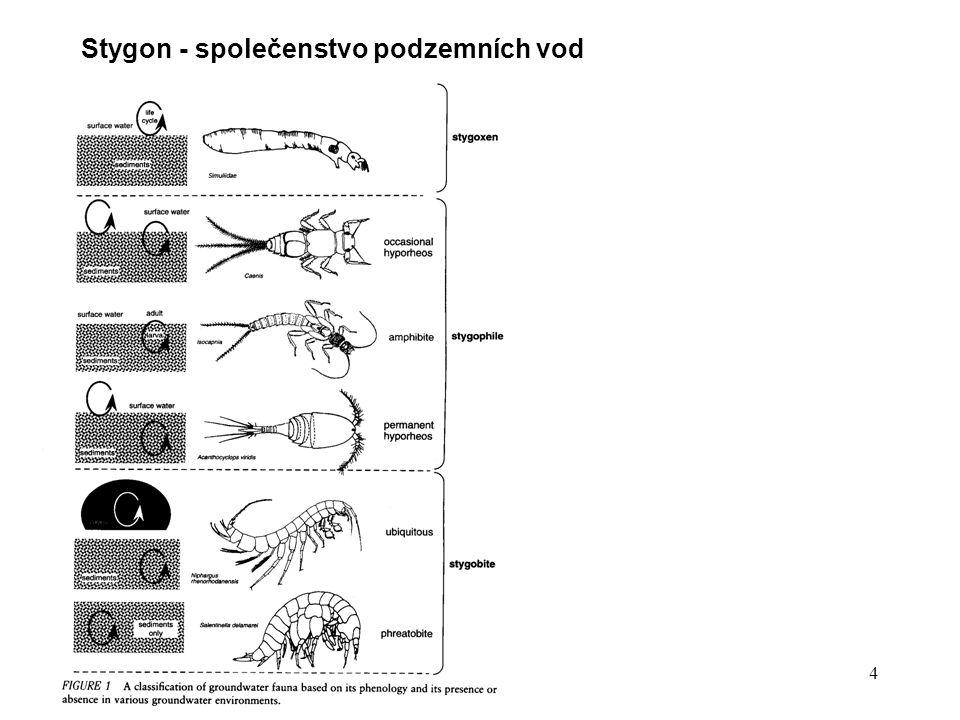 4 Stygon - společenstvo podzemních vod