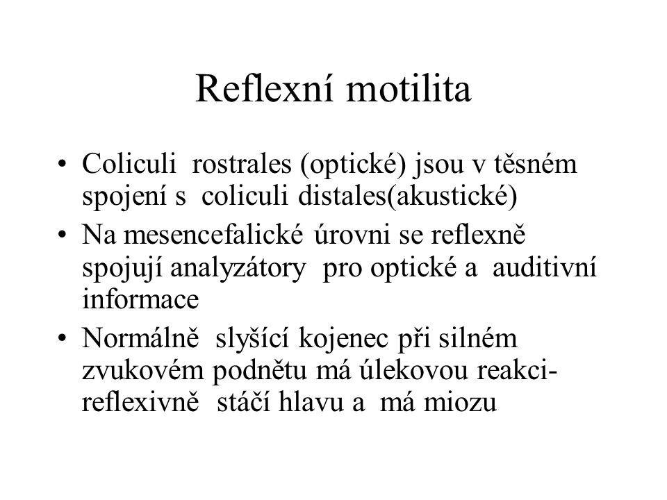 Reflexní motilita Coliculi rostrales (optické) jsou v těsném spojení s coliculi distales(akustické) Na mesencefalické úrovni se reflexně spojují analy