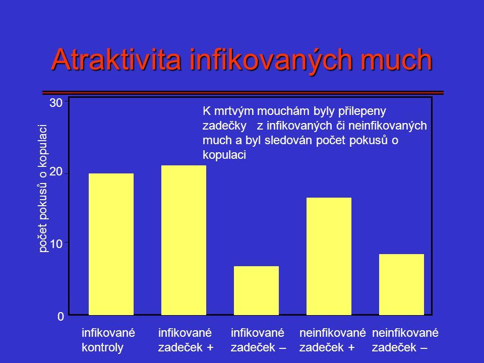 0 10 20 Atraktivita infikovaných much 30 počet pokusů o kopulaci infikované kontroly infikované zadeček + infikované zadeček – neinfikované zadeček +