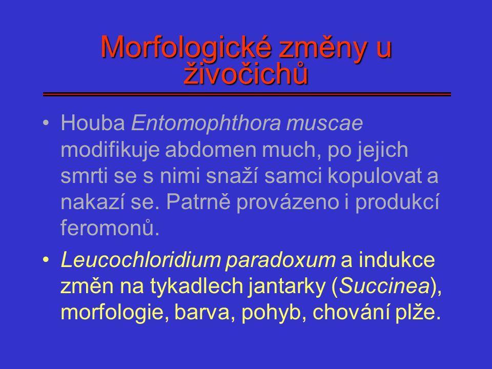 Morfologické změny u živočichů Houba Entomophthora muscae modifikuje abdomen much, po jejich smrti se s nimi snaží samci kopulovat a nakazí se. Patrně