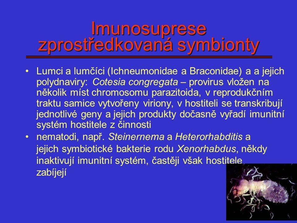 Imunosuprese zprostředkovaná symbionty Lumci a lumčíci (Ichneumonidae a Braconidae) a a jejich polydnaviry: Cotesia congregata – provirus vložen na ně