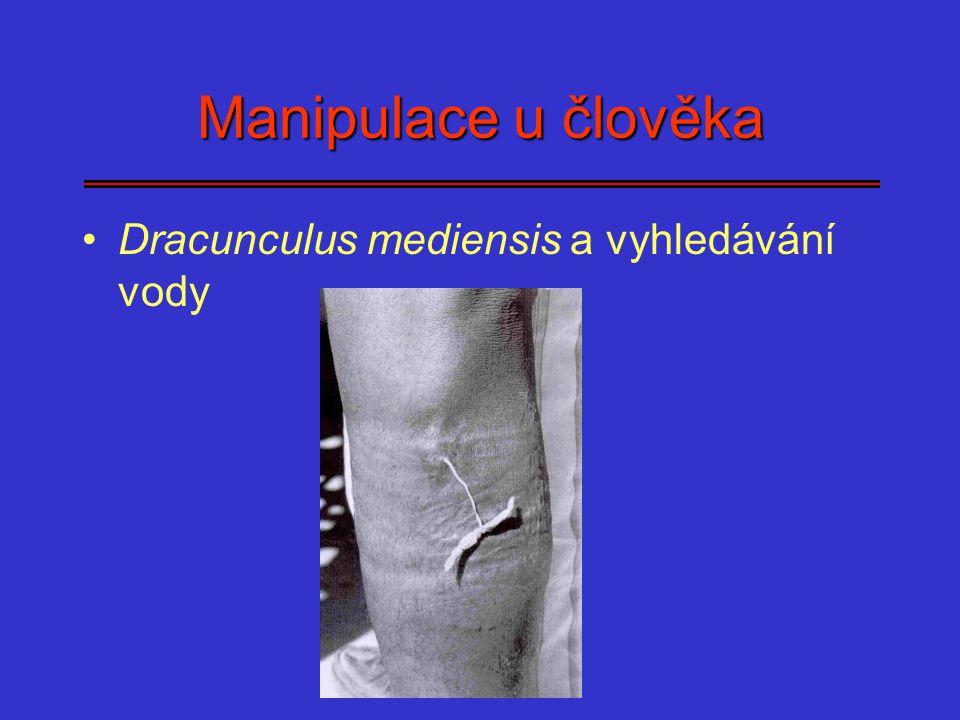 Manipulace u člověka Dracunculus mediensis a vyhledávání vody