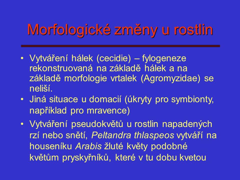 Morfologické změny u rostlin Vytváření hálek (cecidie) – fylogeneze rekonstruovaná na základě hálek a na základě morfologie vrtalek (Agromyzidae) se n