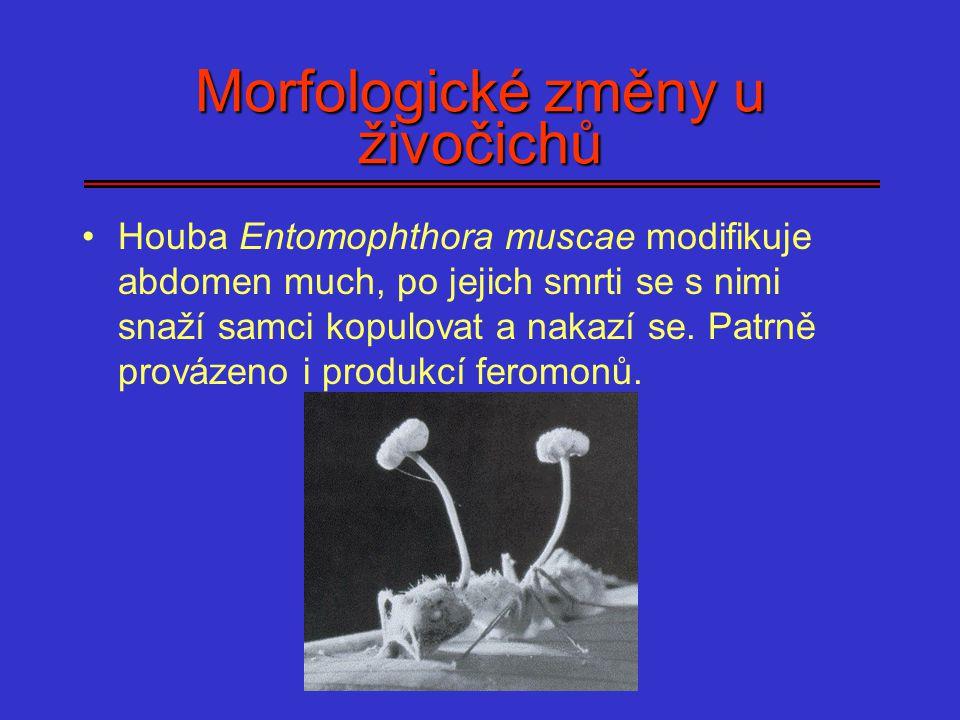 Příklady manipulace u obratlovců Echinococus granulosus a karibu Toxoplasma gondii a hlodavci Virus vztekliny Kapavka a syfilis