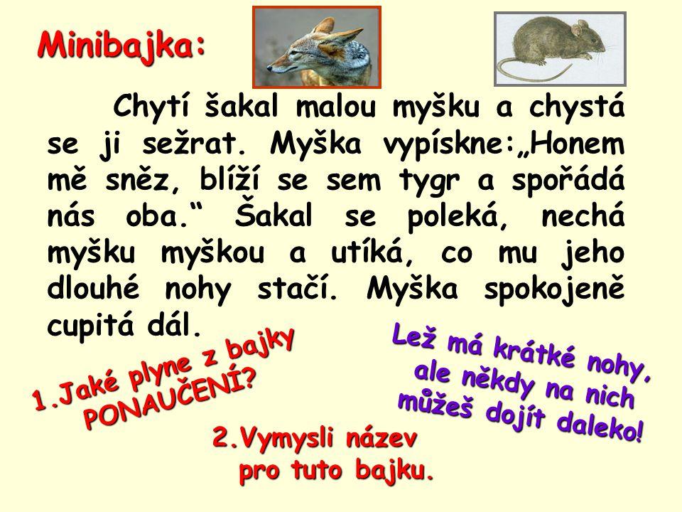 """Minibajka: Chytí šakal malou myšku a chystá se ji sežrat. Myška vypískne:""""Honem mě sněz, blíží se sem tygr a spořádá nás oba."""" Šakal se poleká, nechá"""