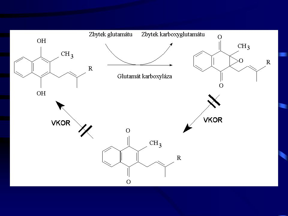 Vitamin K v potravě: Excesívní příjem vitaminu K  Warfarinová rezistence Nestabilní příjem vitaminu K  Nestabilní antikoagulace Deplece vitaminu K  Nestabilní antikoagulace