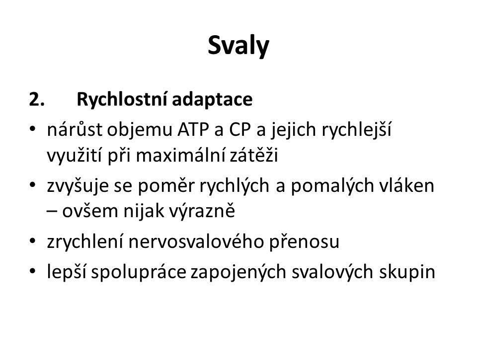 Svaly 2.Rychlostní adaptace nárůst objemu ATP a CP a jejich rychlejší využití při maximální zátěži zvyšuje se poměr rychlých a pomalých vláken – ovšem