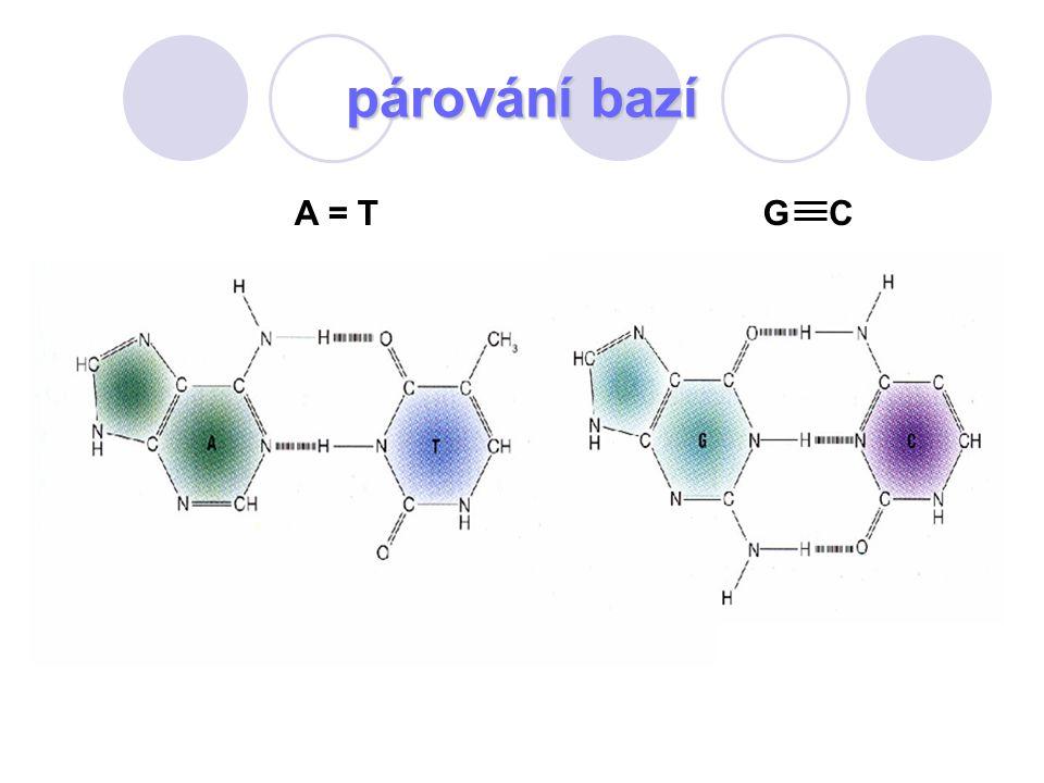 párování bazí A = TGC