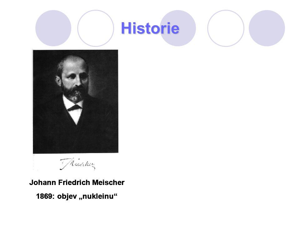 """Historie Johann Friedrich Meischer 1869: objev """"nukleinu"""" Johann Friedrich Meischer 1869: objev """"nukleinu"""" Johann Friedrich Meischer 1869: objev """"nukl"""