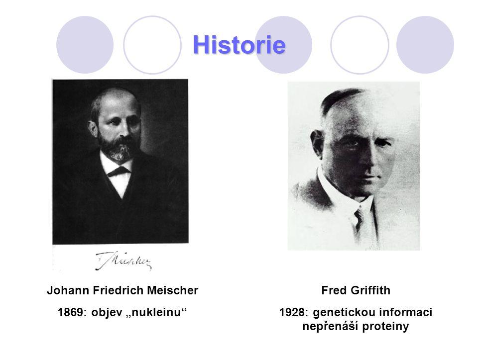 """Historie Johann Friedrich Meischer 1869: objev """"nukleinu"""" Fred Griffith 1928: genetickou informaci nepřenáší proteiny"""