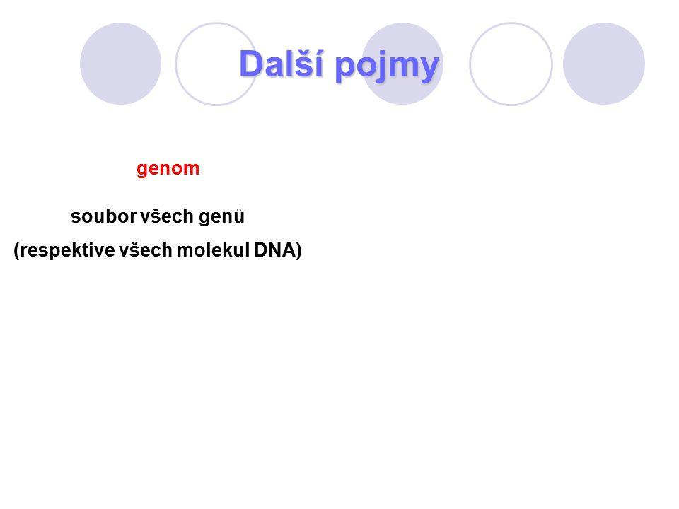 Další pojmy genom soubor všech genů (respektive všech molekul DNA) genom soubor všech genů (respektive všech molekul DNA)