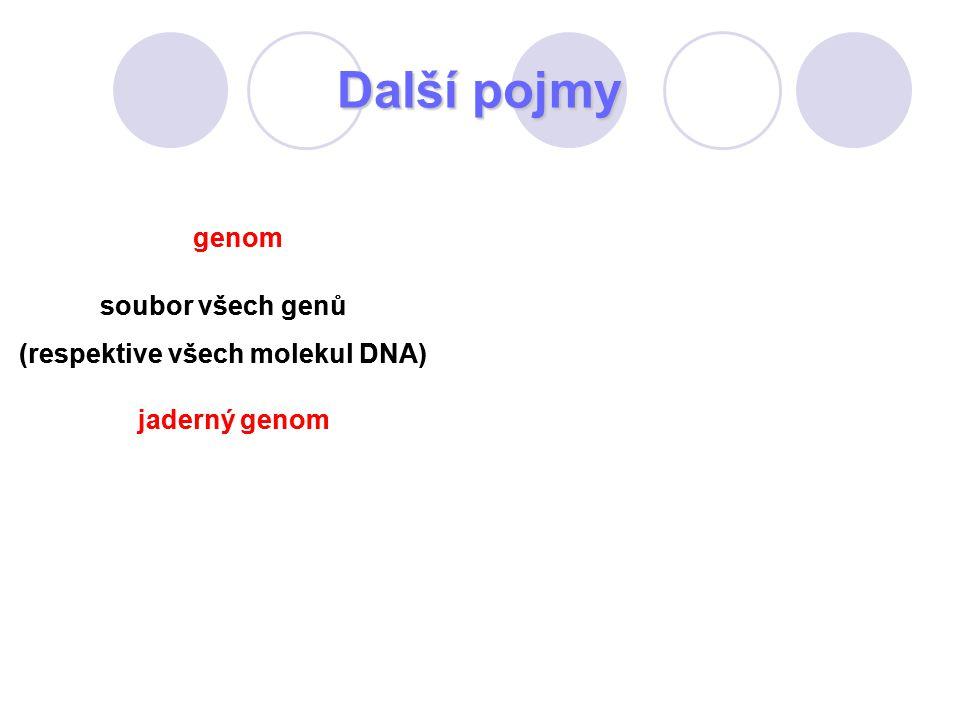 Další pojmy genom soubor všech genů (respektive všech molekul DNA) jaderný genom genom soubor všech genů (respektive všech molekul DNA) jaderný genom