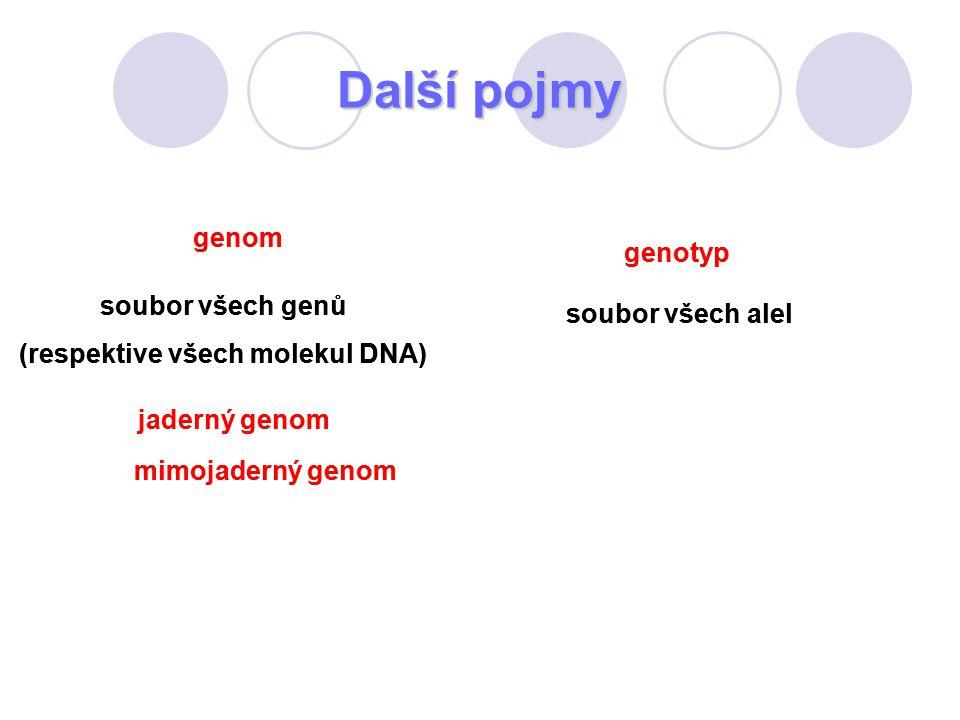 Další pojmy genom soubor všech genů (respektive všech molekul DNA) jaderný genom mimojaderný genom genotyp soubor všech alel genom soubor všech genů (