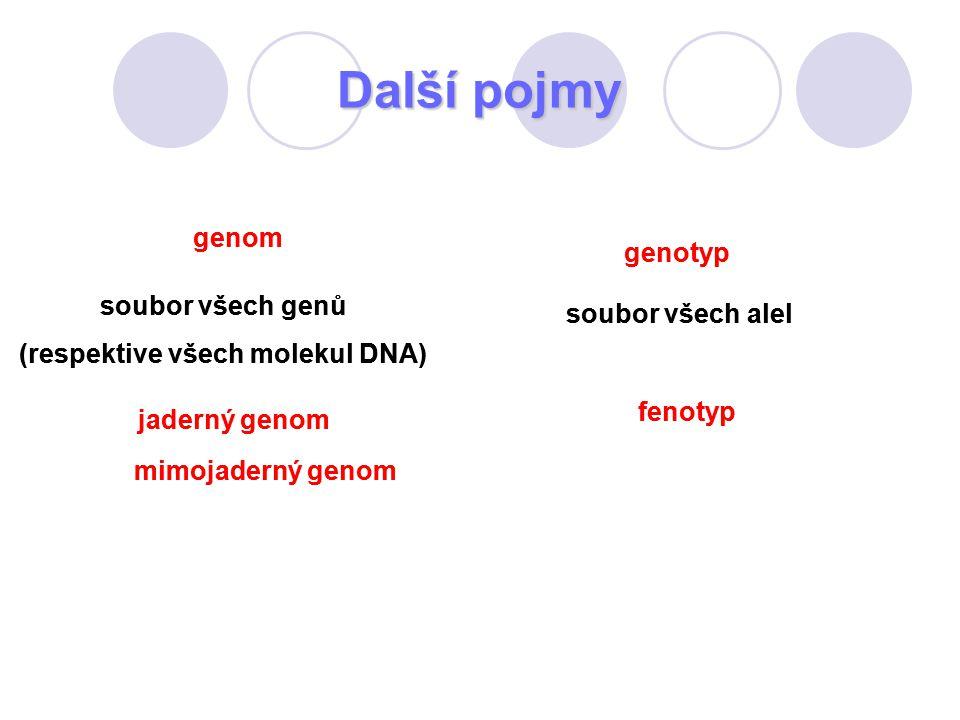 Další pojmy genom soubor všech genů (respektive všech molekul DNA) jaderný genom mimojaderný genom genotyp soubor všech alel fenotyp genom soubor všec