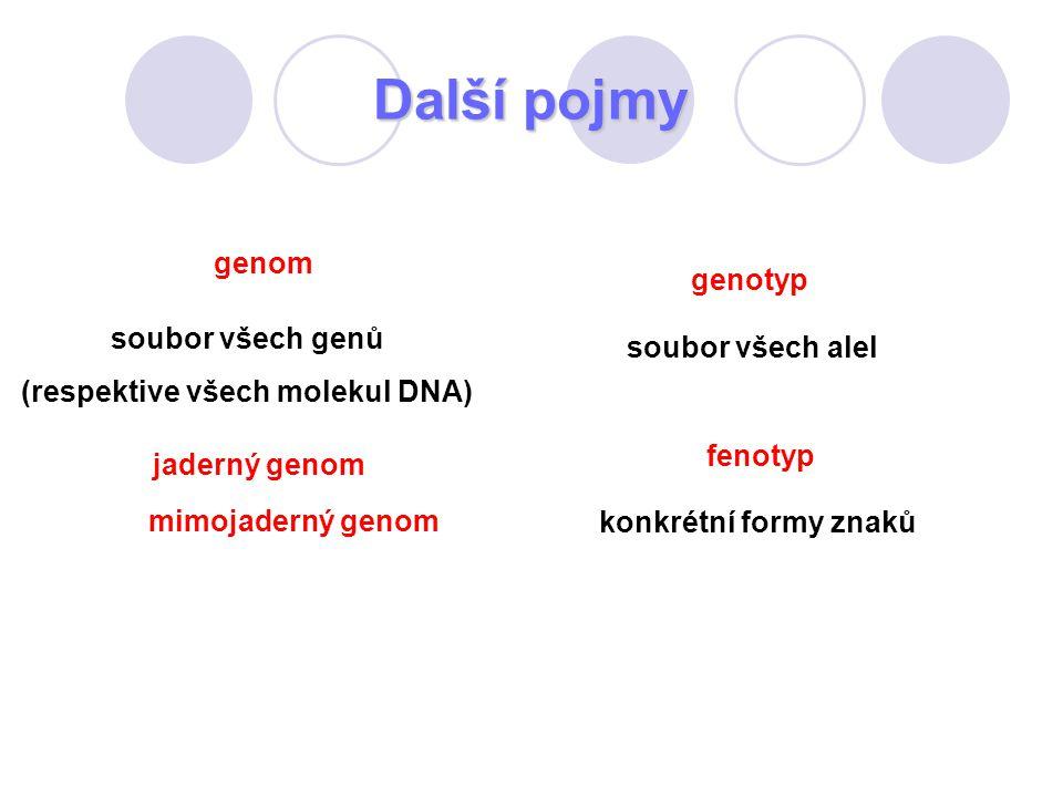 Další pojmy genom soubor všech genů (respektive všech molekul DNA) jaderný genom mimojaderný genom genotyp soubor všech alel fenotyp konkrétní formy z