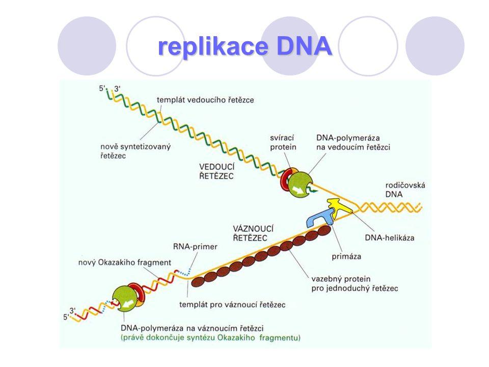 replikace DNA