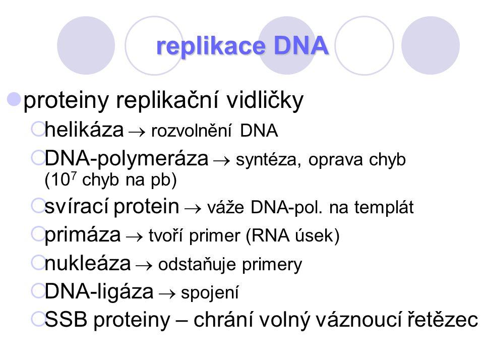 proteiny replikační vidličky  helikáza  rozvolnění DNA  DNA-polymeráza  syntéza, oprava chyb (10 7 chyb na pb)  svírací protein  váže DNA-pol. n
