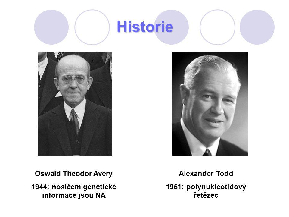 Historie Oswald Theodor Avery 1944: nosičem genetické informace jsou NA Alexander Todd 1951: polynukleotidový řetězec Oswald Theodor Avery 1944: nosič