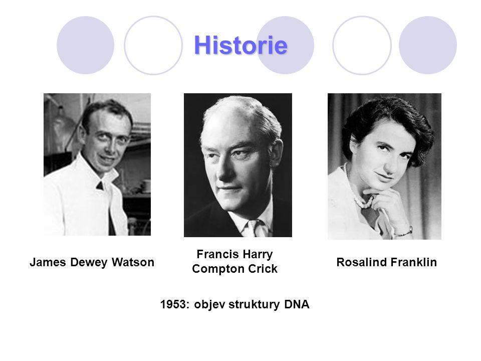 Historie James Dewey Watson Francis Harry Compton Crick Rosalind Franklin 1953: objev struktury DNA