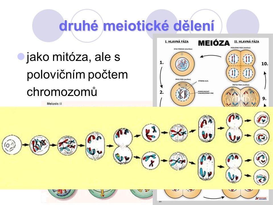 79 druhé meiotické dělení jako mitóza, ale s polovičním počtem chromozomů