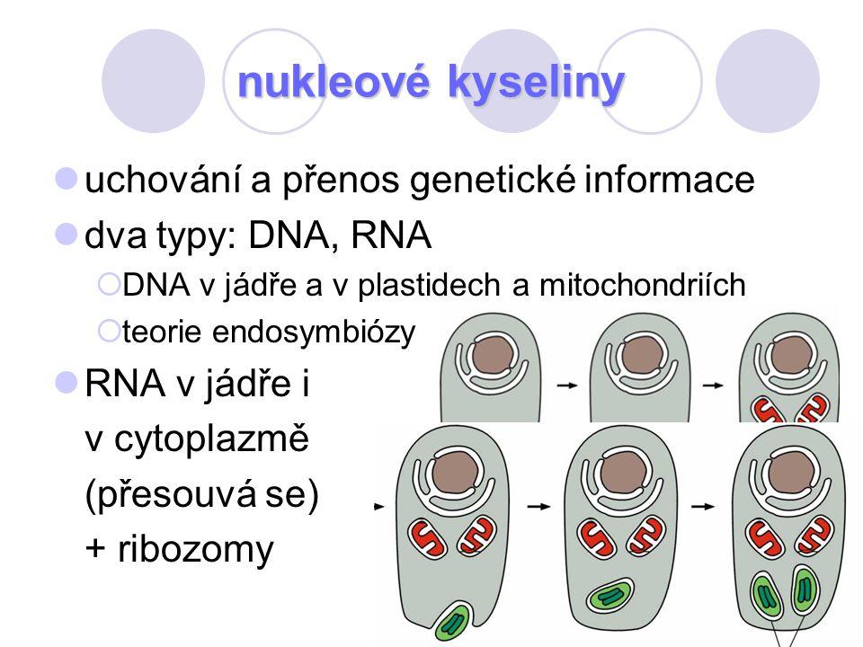 nukleové kyseliny uchování a přenos genetické informace dva typy: DNA, RNA  DNA v jádře a v plastidech a mitochondriích  teorie endosymbiózy RNA v j