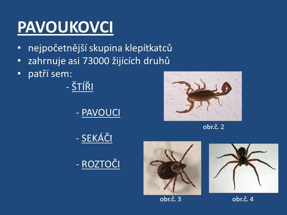 PAVOUKOVCI nejpočetnější skupina klepítkatců zahrnuje asi 73000 žijících druhů patří sem: - ŠTÍŘI - PAVOUCI - SEKÁČI - ROZTOČI obr.č.