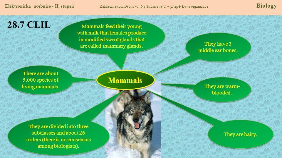 28.7 CLIL Elektronická učebnice - II. stupeň Základní škola Děčín VI, Na Stráni 879/2 – příspěvková organizace Biology They are warm- blooded. Mammals